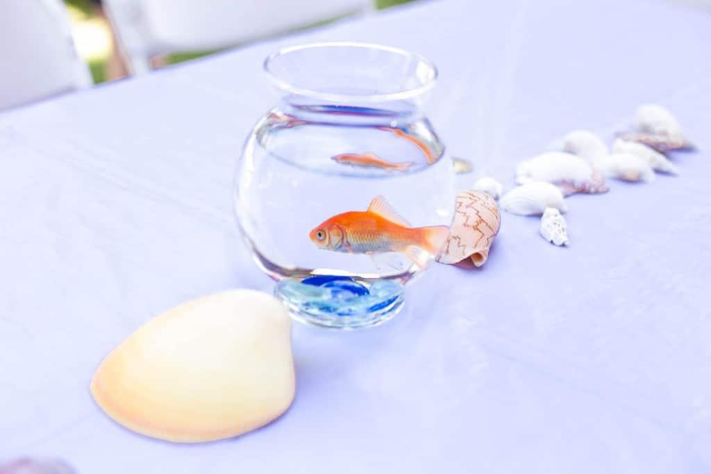 Goldfish centerpiece - Under the Sea birthday party