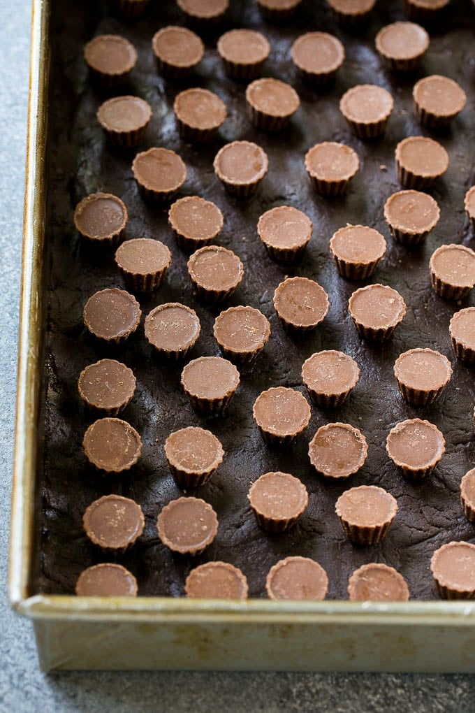 A layer of mini peanut butter cups on top of a chocolate crust in a baking pan for a chocolate gooey butter cake.