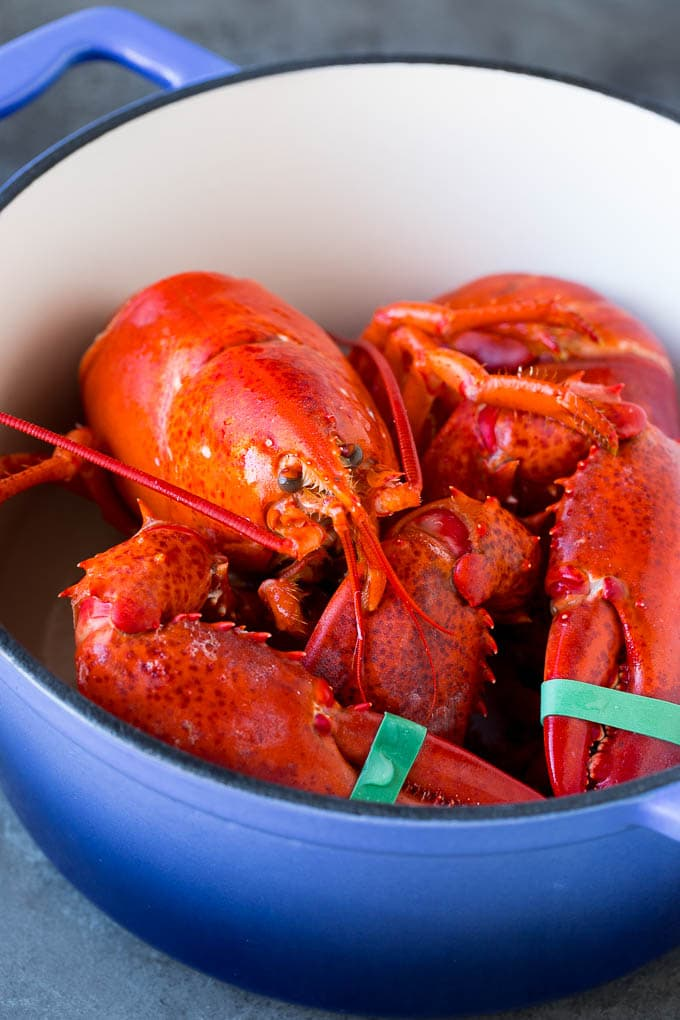 A cooked lobster in a pot.
