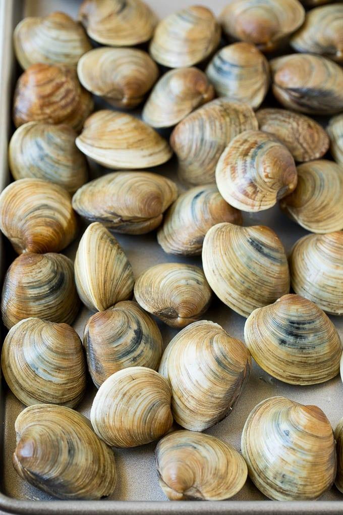 Fresh clams on a sheet pan.